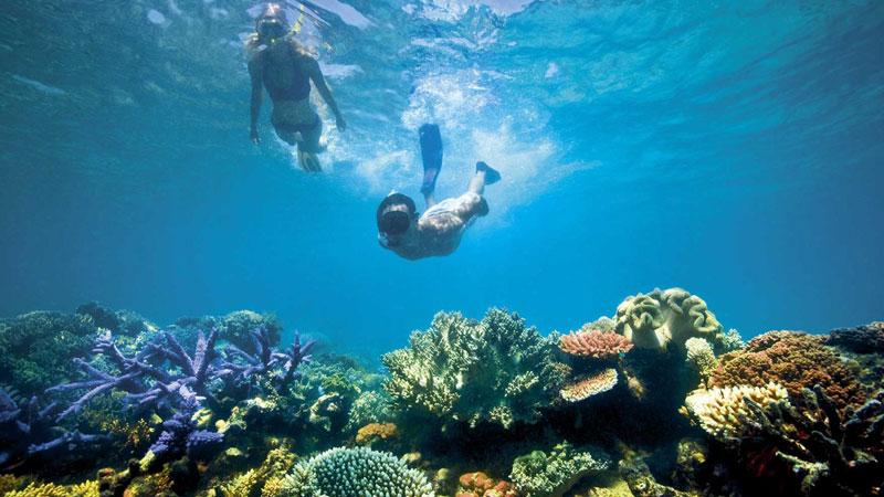 Snorkelling Wooli