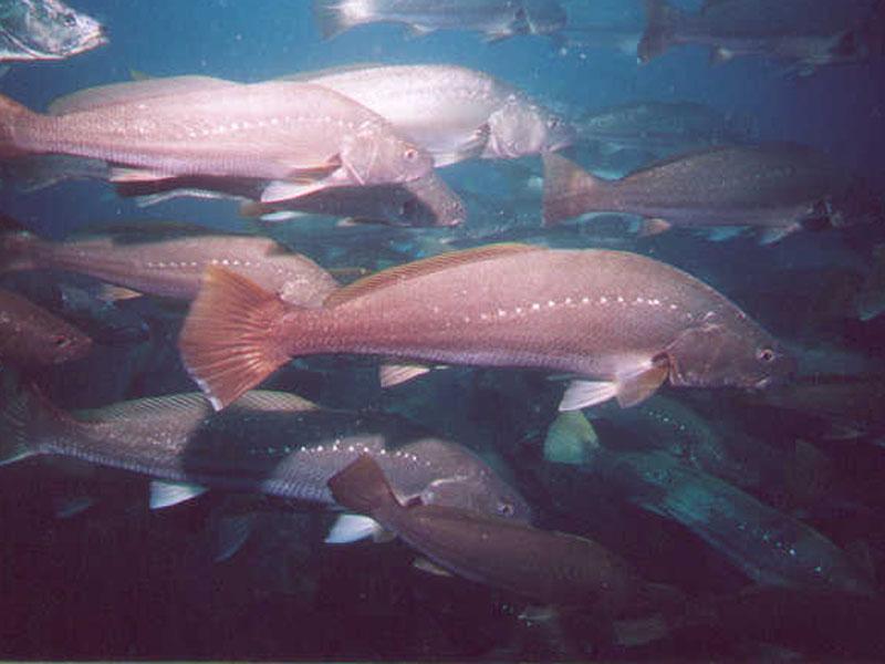 Wooli Dive Centre